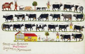 Boustro Oxen